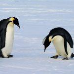 Das Corona-Virus ist am Südpol angekommen