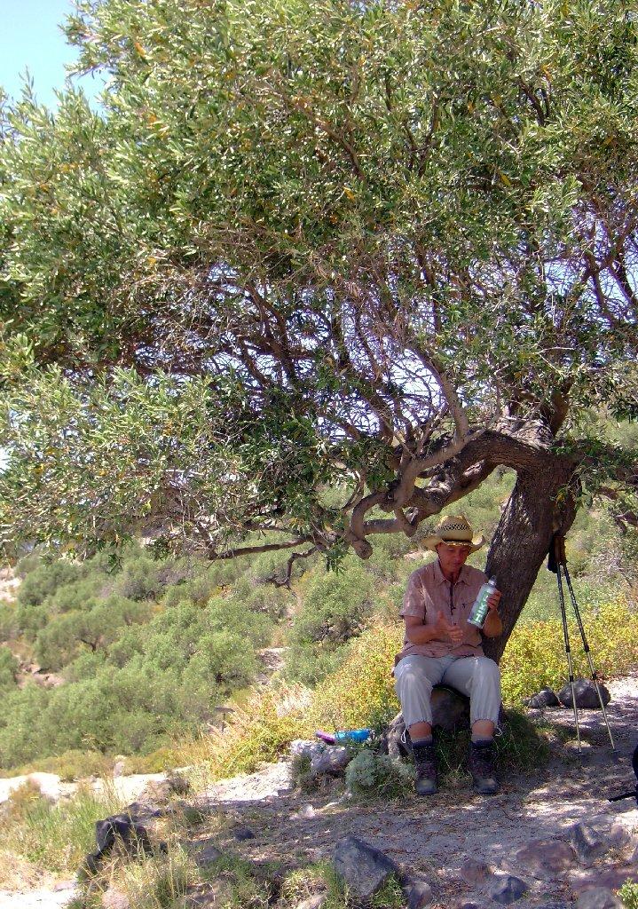 Im Valle Olivio Grande